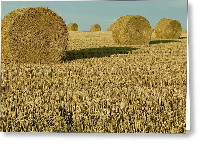 Bales Of Grain At Harvest Time Greeting Card by Cyril Ruoso