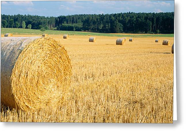Bales Of Hay Southern Germany Greeting Card by Panoramic Images