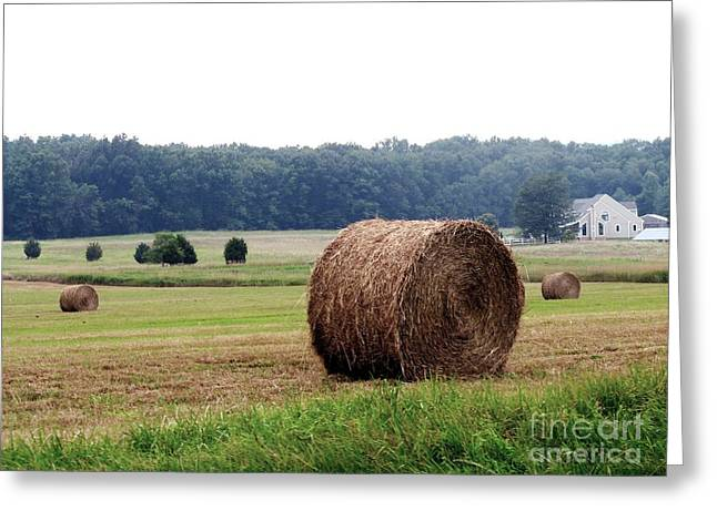 Bales In Solebury Greeting Card by Christopher Plummer