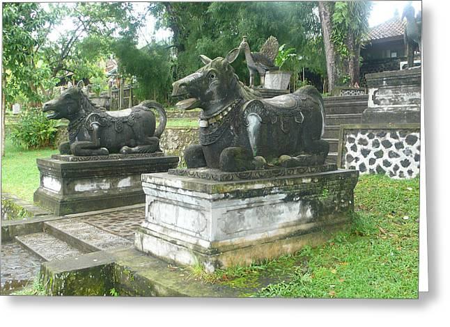 Bali Bulls Greeting Card by Jack Edson Adams