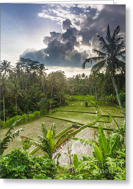Bali Rice Terraces Greeting Card by Didier Marti