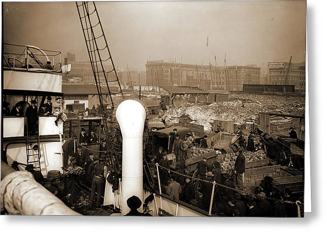 Baltimore, Maryland, Unloading Banana Steamer, Harbors Greeting Card by Litz Collection