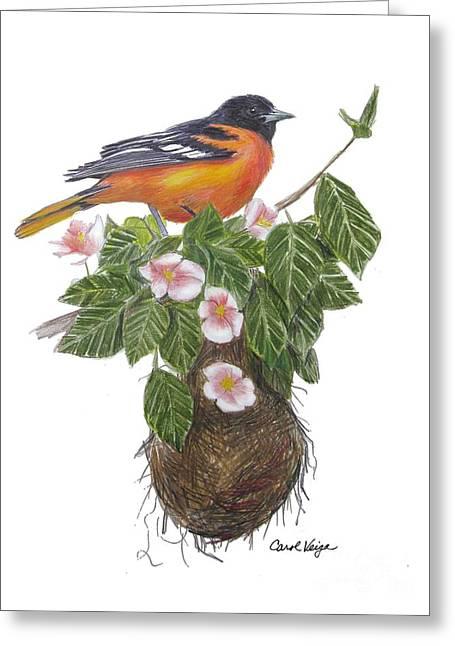 Baltimore Oriole Greeting Card by Carol Veiga