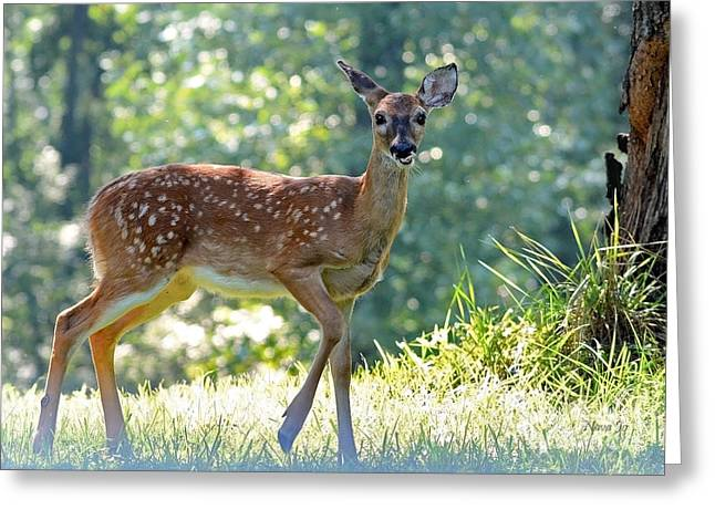 Bambi 2 Greeting Card by Nava Thompson