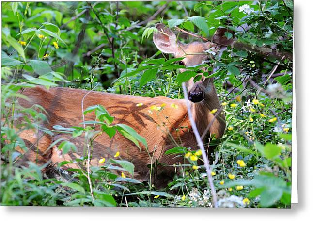 Greeting Card featuring the photograph Bambi by David Armstrong