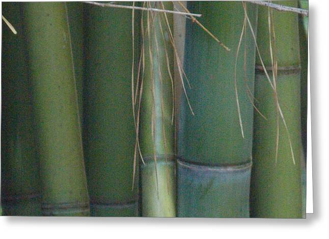 Bamboo 3 Greeting Card