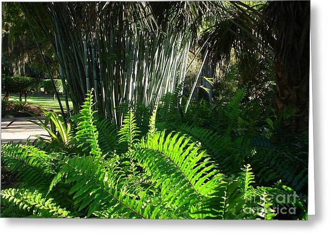 Bamboo And Fern Greeting Card by Lew Davis