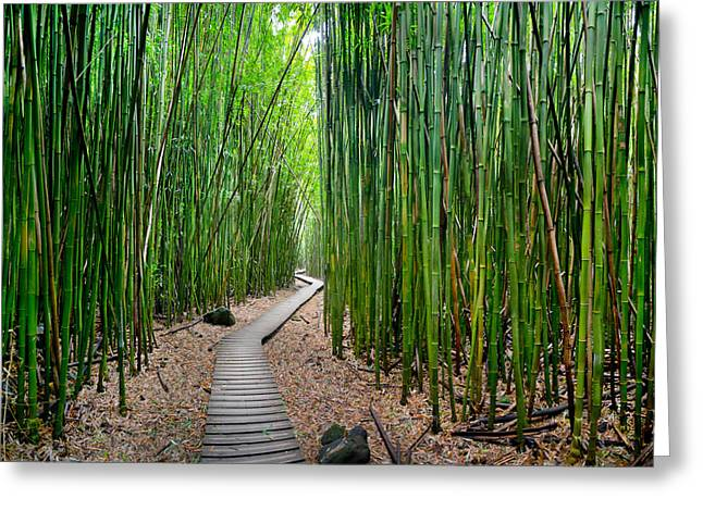 Bamboo Brilliance Greeting Card by Sean Davey