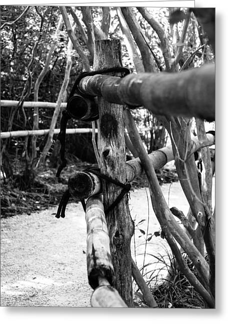 Bamboo Fence Greeting Card by Richard Taylor