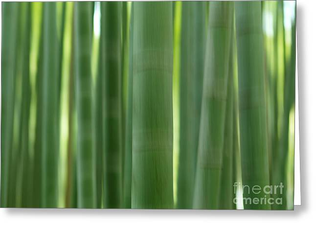 Bamboo Forest Abstract Closeup Of Stems Greeting Card by Oleksiy Maksymenko