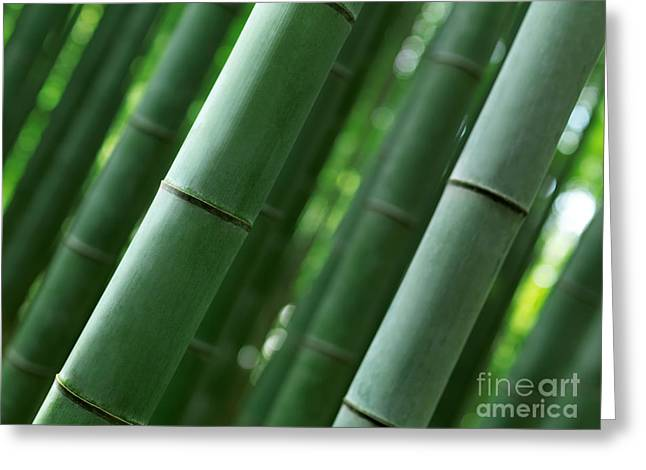 Bamboo Forest Closeup Of Stems Greeting Card by Oleksiy Maksymenko