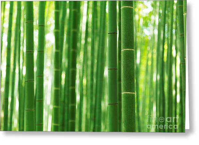 Bamboo Forest Culms Closeup Abstract Background Greeting Card by Oleksiy Maksymenko
