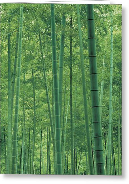 Bamboo Forest Nagaokakyo Kyoto Japan Greeting Card by Panoramic Images