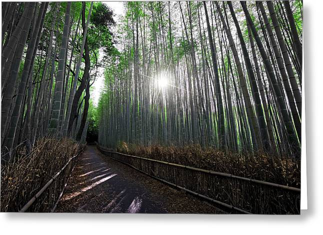 Bamboo Forest Path Of Kyoto Greeting Card by Daniel Hagerman
