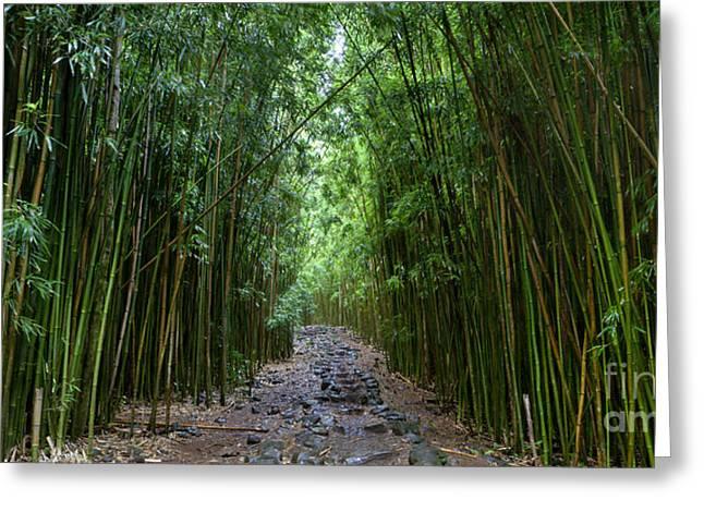 Bamboo Forest Trail Hana Maui Greeting Card