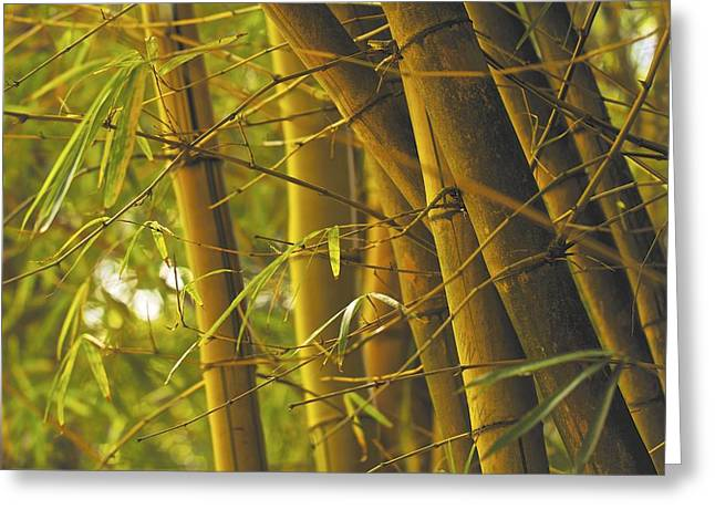 Bamboo Gold Greeting Card