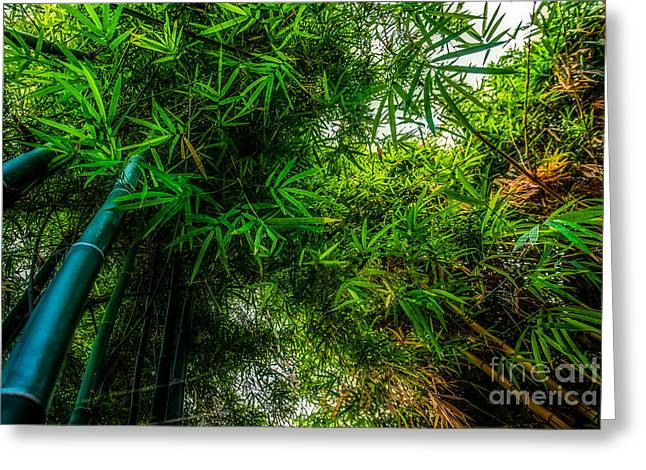 bamboo III - green Greeting Card by Hannes Cmarits