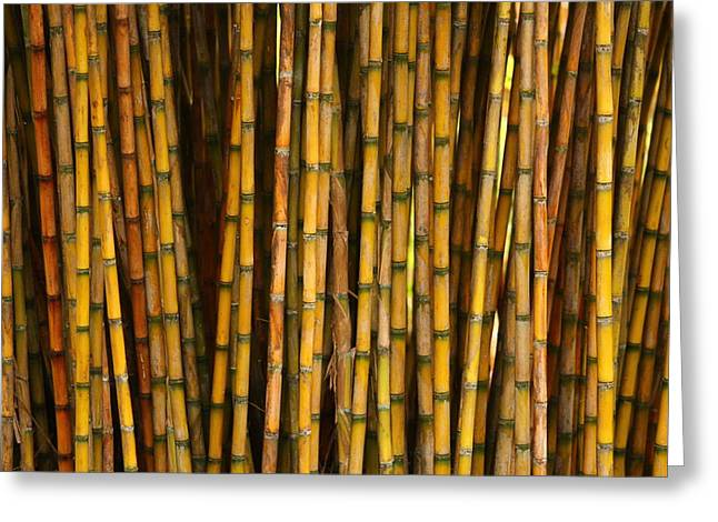 Bamboo Greeting Card by Jacqui Collett
