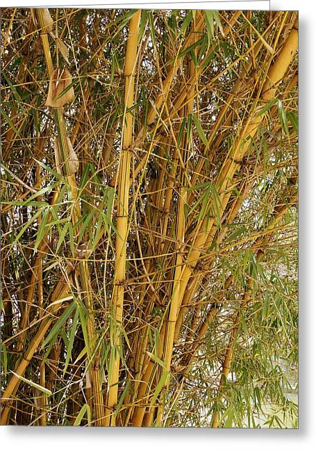 Bamboo Plant Greeting Card by Science Photo Library