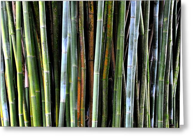 Greeting Card featuring the photograph Bamboo Rainbow by Jodi Terracina