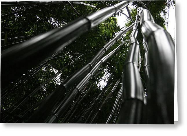 Bamboo Skies 6 Greeting Card