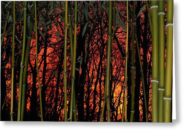 Bamboo Sunset Greeting Card by Sharon Costa