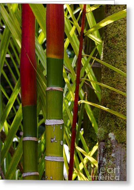 Bamboo Too All Profits Go To Hospice Of The Calumet Area Greeting Card