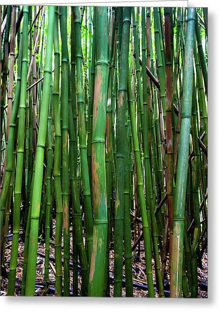 Bamboo Trees, Maui, Hawaii, Usa Greeting Card