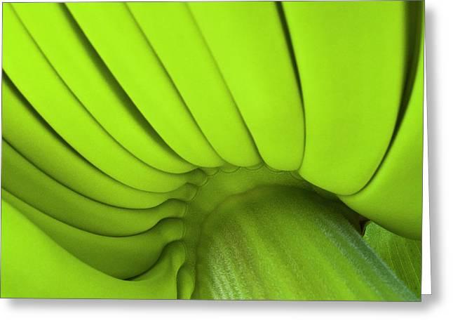 Banana Bunch Greeting Card by Heiko Koehrer-Wagner