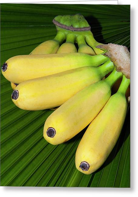 Banana Bunch (musa Acuminata, Musa Greeting Card by Nico Tondini