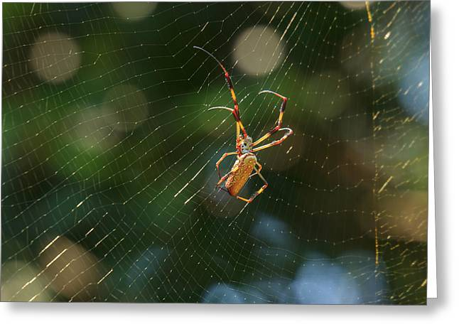Banana Spider In Web Greeting Card by Patricia Schaefer