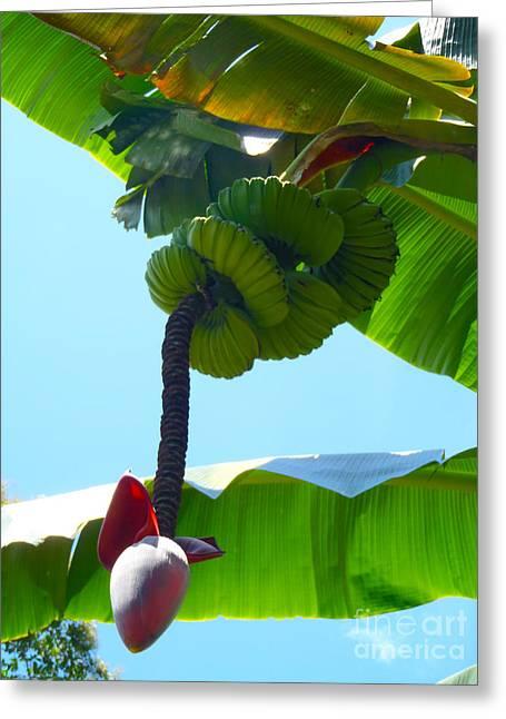 Banana Stalk Greeting Card
