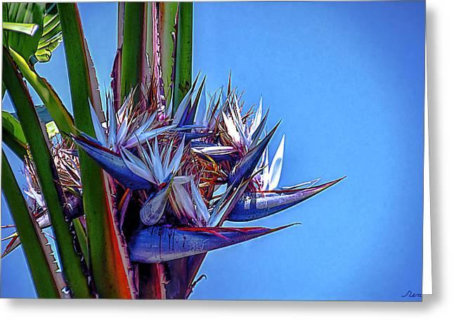 Banana Tree Daylight 3 Greeting Card