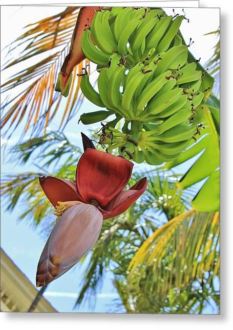 banana tree flower and fruits photographiryna goodall