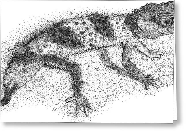 Banded Knob Tailed Gecko Greeting Card by Roger Hall