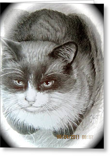 Greeting Card featuring the painting Bandit by Patricia Schneider Mitchell