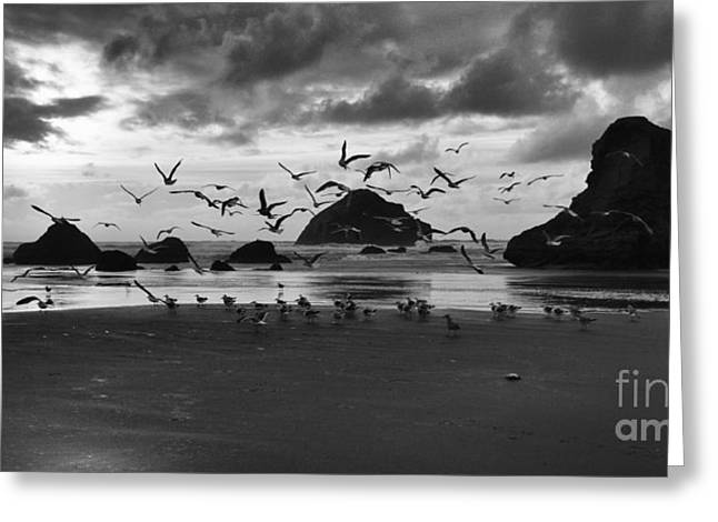Bandon By The Sea Taking Flight Greeting Card by Bob Christopher