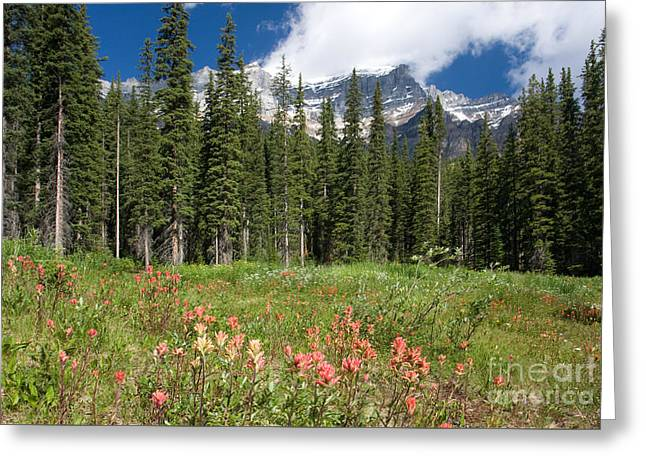 Greeting Card featuring the photograph Banff Wildflowers by Chris Scroggins
