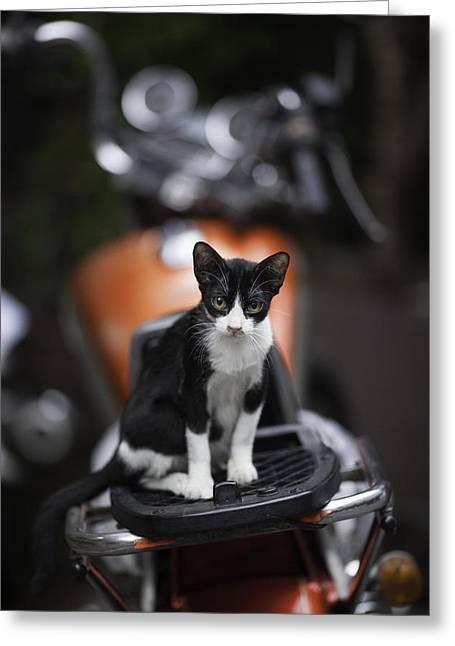 Bangkok Cat Greeting Card by David Longstreath