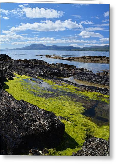 Bantry Bay In August Greeting Card