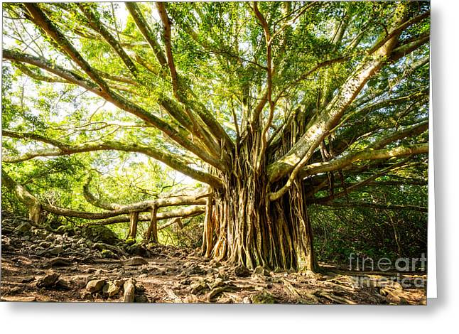Tree Of Life Greeting Card by Jamie Pham
