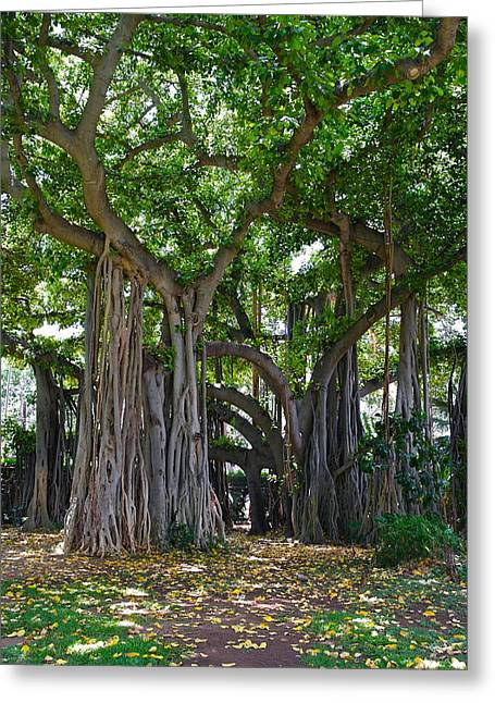 Banyan Tree At Honolulu Zoo Greeting Card