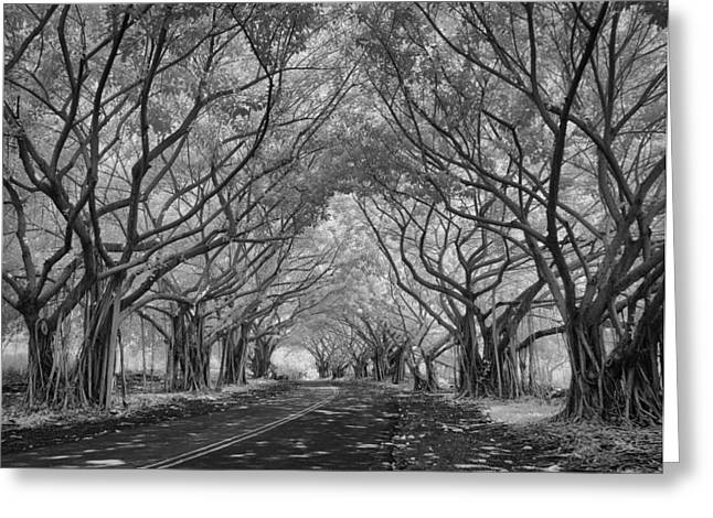 Banyan Tree Lined Road Greeting Card