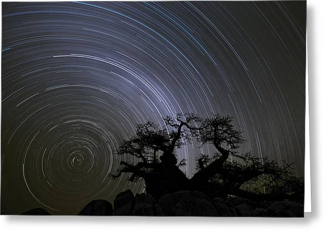 Baobab And Star Trails  Botswana Greeting Card by Vincent Grafhorst