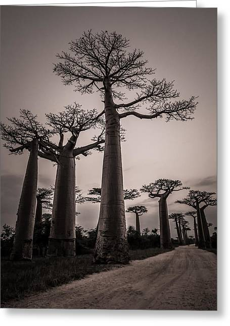 Baobab Avenue Greeting Card