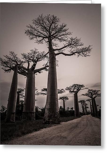 Baobab Avenue Greeting Card by Linda Villers