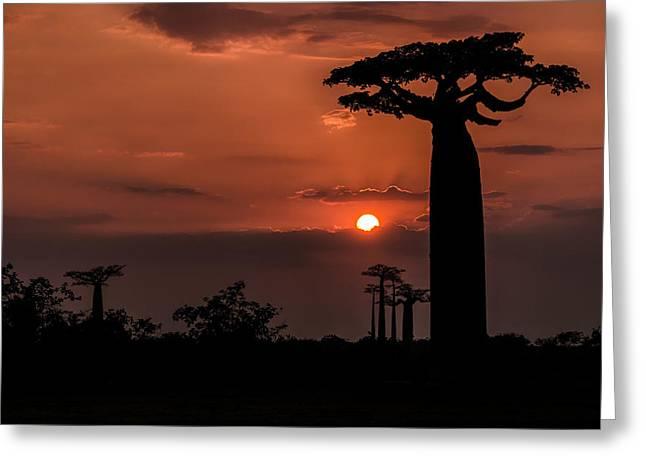 Baobab Sunrise Greeting Card by Linda Villers