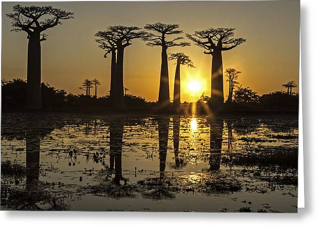 Greeting Card featuring the photograph Baobab Sunset by Judi Baker