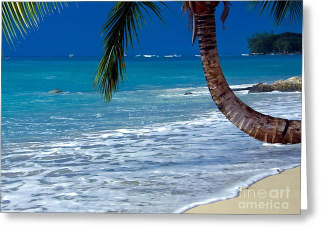 Barbados Beauty Greeting Card by Sophie Vigneault