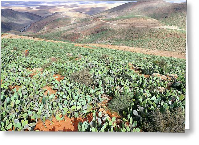 Barbary Fig (opuntia Ficus-indica) Greeting Card by Thierry Berrod, Mona Lisa Production